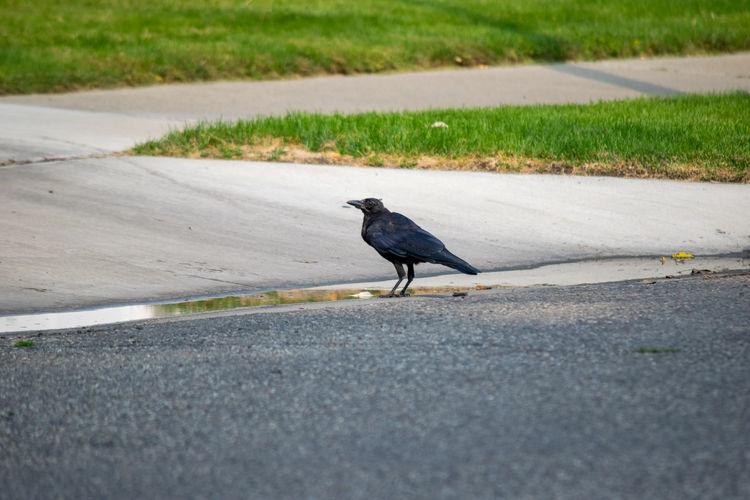 Bird perching on a road