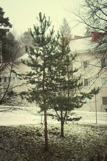Sataa lunta. Snowing
