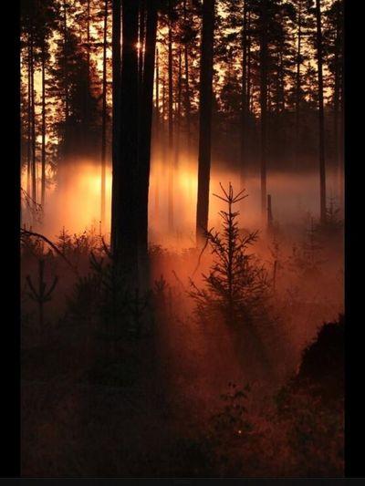"""Fall-Ô-me Viens LÉA dans ma Forêt Secrète... """"Qui m'Aime me Suive alors..."""" Enjoying Life"""