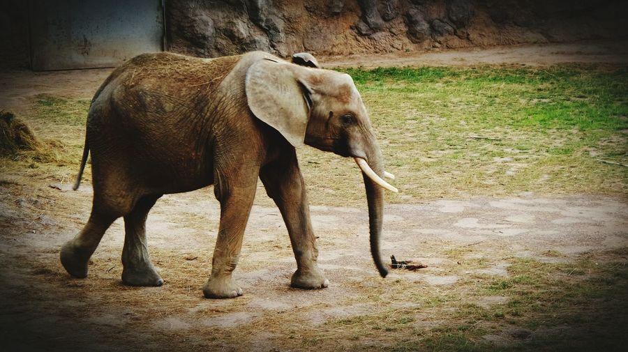 Samsung K Zoom Landscape_photography ZOO-PHOTO Zoo Animals  Landscape Hello World