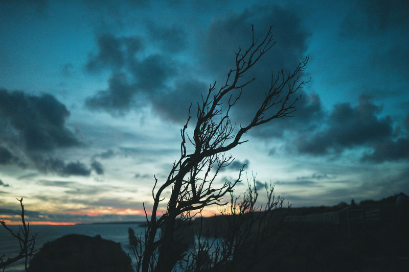 at Twelve Apostles Twelve Apostles Bare Tree Beauty In Nature Cloud - Sky Dead Plant Dusk Environment Land Nature No People Non-urban Scene Outdoors Overcast Plant Scenics - Nature Silhouette Sky Sunset Tranquil Scene Tranquility Tree