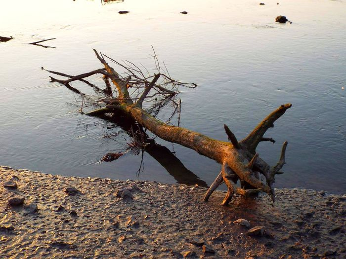 shadows of the river EyeEm Nature Lover EyeEm Best Shots Branches River Water Water At Dusk Mud Sunlight And Shadow Sunlight Shadows On The Shore Washed Up On Beach Wooden Tree Welsh Coast Water Lake Sky Dead Tree Driftwood Fallen Tree Dead Plant Shore