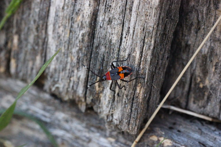 Animal Animal Themes Animal Wildlife Animals In The Wild Beetle Close-up Day Fence High Angle View Insect Invertebrate Minibeast Nature No People One Animal Outdoors Paling Red Selective Focus Textured  Wood - Material