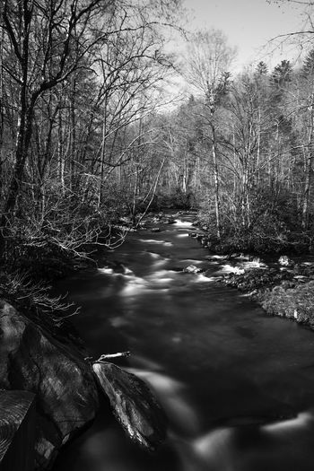 Nature Photography Seascape Photography Bare Tree Beauty In Nature Blackandwhite Bnw_captures Bnw_collection Bnwphotography Day Flowing Flowing Water Forest Land Light And Shadow Nature Nature_collection Non-urban Scene Outdoors Photography Plant Stream - Flowing Water Tree Water