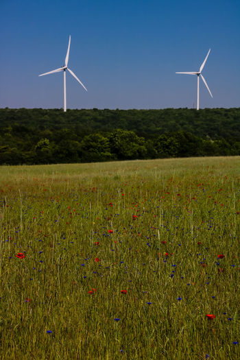 Alternative Energy Beauty In Nature Blue Day Environmental Conservation Environmental Issues Field Fuel And Power Generation Grass Industrial Windmill Landscape Nature No People Outdoors Power In Nature Renewable Energy Rural Scene Sky Technology Traditional Windmill Wind Power Wind Turbine Windmill