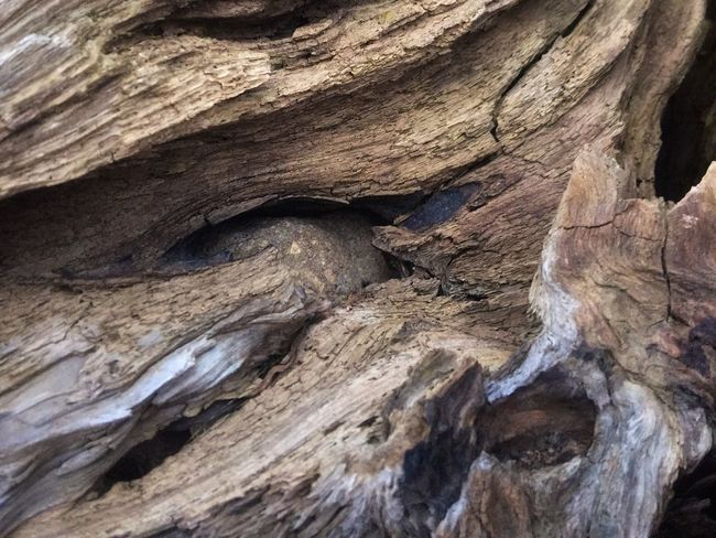 Full Frame Rock Geology Rock - Object Backgrounds Solid Nature Pattern Tree Beauty In Nature Textured  Natural Pattern Close-up Outdoors Non-urban Scene Physical Geography Day No People