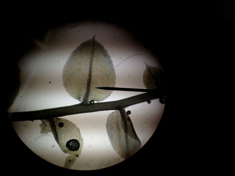 Animal Themes Close-up Indoors  Microscope Nature No People