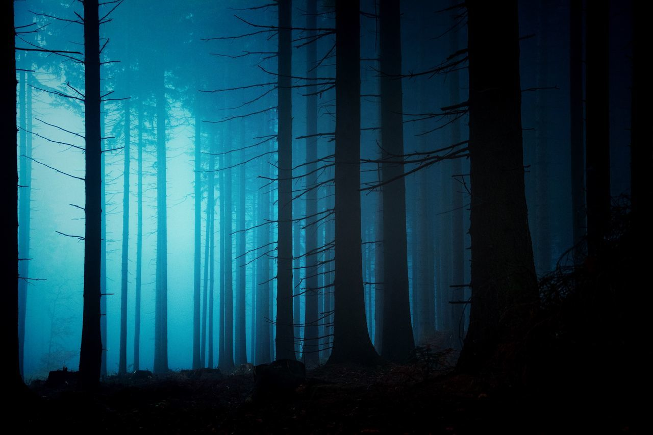 Beauty In Nature, Cold Temperature, Fog, Foggy, Forest