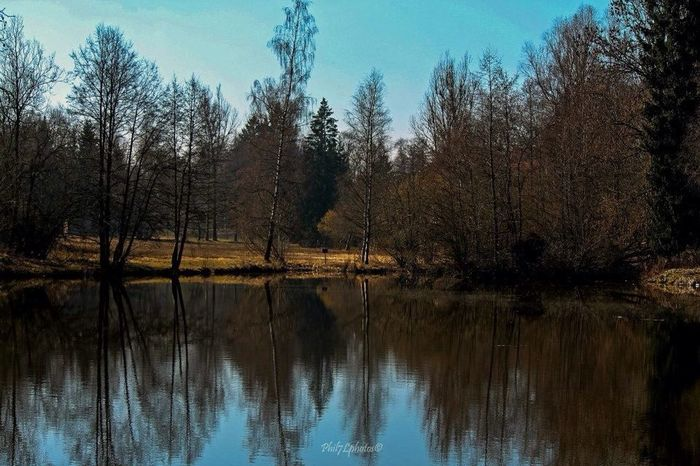 Nature Landscape Schwarzwald Relaxing
