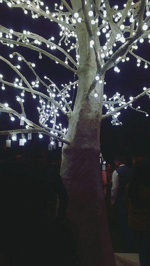 The Wishing Tree 🌠 International Festival Wishing Tree Lights Tree Outdoors Tree Trunk Nature Night No People Beauty In Nature