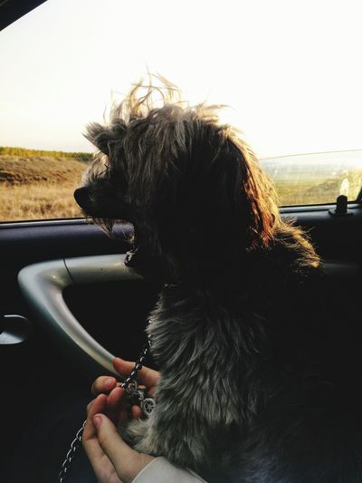 Car Transportation Car Interior Land Vehicle Pets Mode Of Transport Dog One Animal Washing Mammal Water Sunset Domestic Animals Day People Animal Themes Sky Adult One Person Close-up Leon
