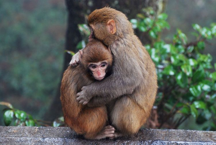 Animal Themes Animals In The Wild Monkey Togetherness Young Animal