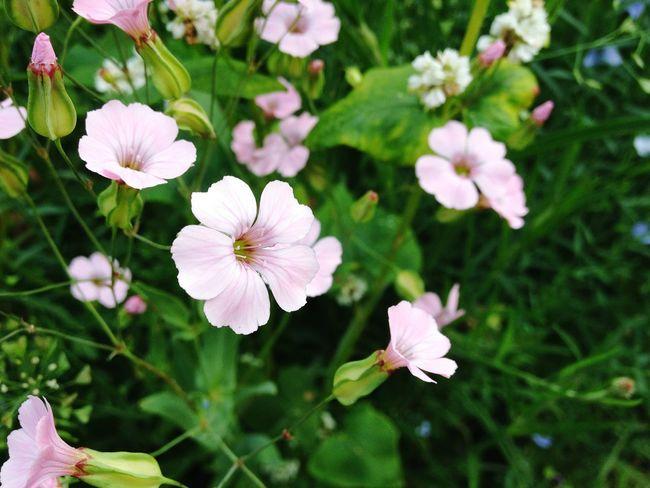 Pinkflower Blooming Botany Pale Pink Stamen Flowering Plant Plant Life In Bloom