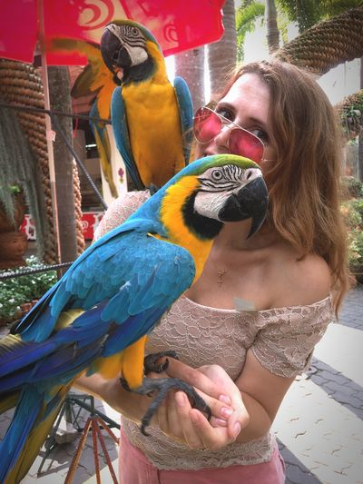 Kakadu Bird Parrot Animal Themes Macaw One Animal Gold And Blue Macaw Animals In The Wild Animal Wildlife Real People Perching Outdoors Beak Young Adult Pets