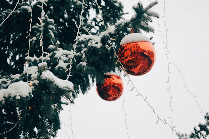 Reflection Contrasting Colors Tree Christmas Decoration Winter Hanging Christmas Snow Celebration Red Close-up Bauble Christmas Ornament Religious Event Decorating The Christmas Tree Santa Claus Celebration Event Christmas Bauble christmas tree Christmas Lights Snowing
