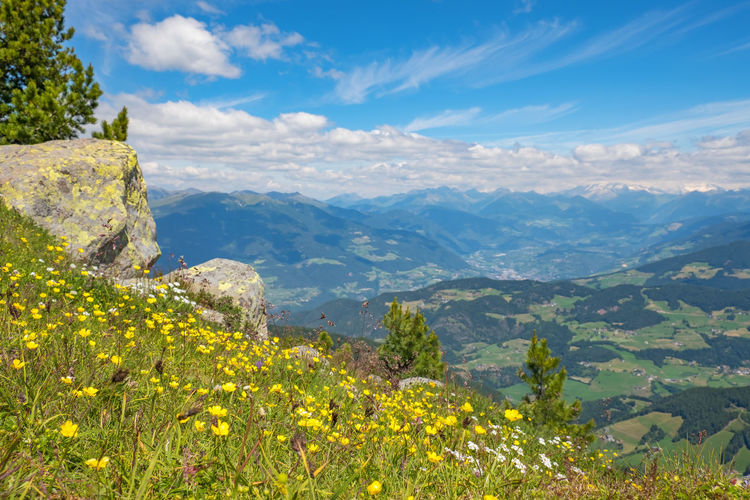 Alp meadow with buttercups flowers and a beautiful view