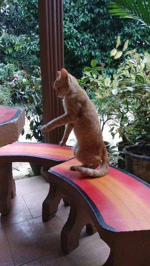 Loneliness Chairs And A Table Standing Cat Orange Cat Cat Lovers Cats Of EyeEm One Animal Mammal Animal Themes Pets Domestic Cat No People Day Outdoors
