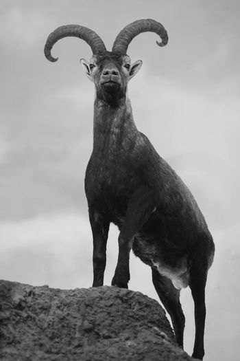 Portrait of elephant standing on rock