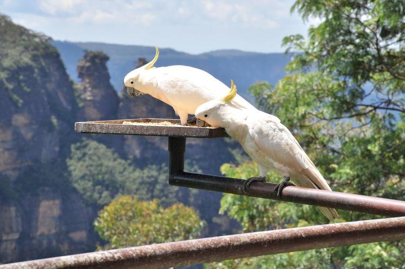 Australia Breathtaking Green Lookout Nature Bluemountains Mountain Point Of View Reserve Sydney