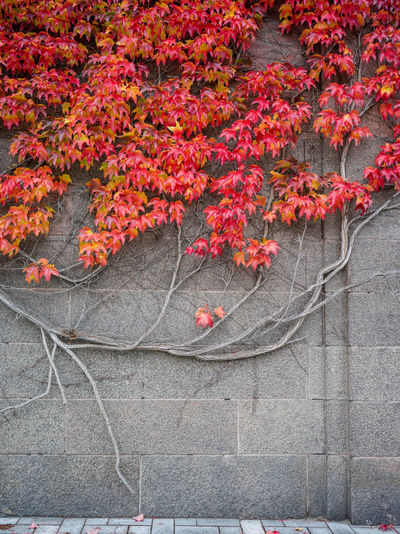 Red flowering plants on tree during autumn