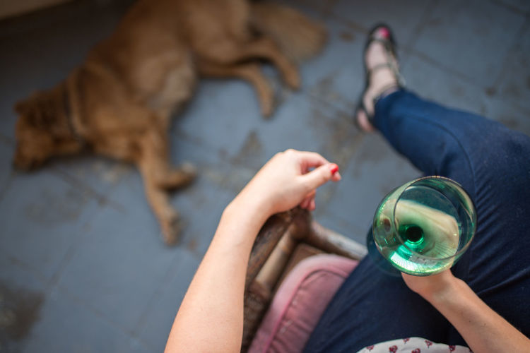 High angle view of woman holding drink while dog lying on floor
