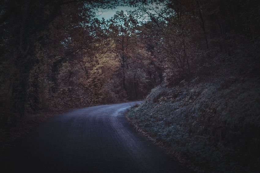 Tree Direction Plant Road The Way Forward Transportation Forest No People Tranquility Nature Beauty In Nature Land Tranquil Scene Day Diminishing Perspective Non-urban Scene Scenics - Nature Outdoors Empty Road Growth