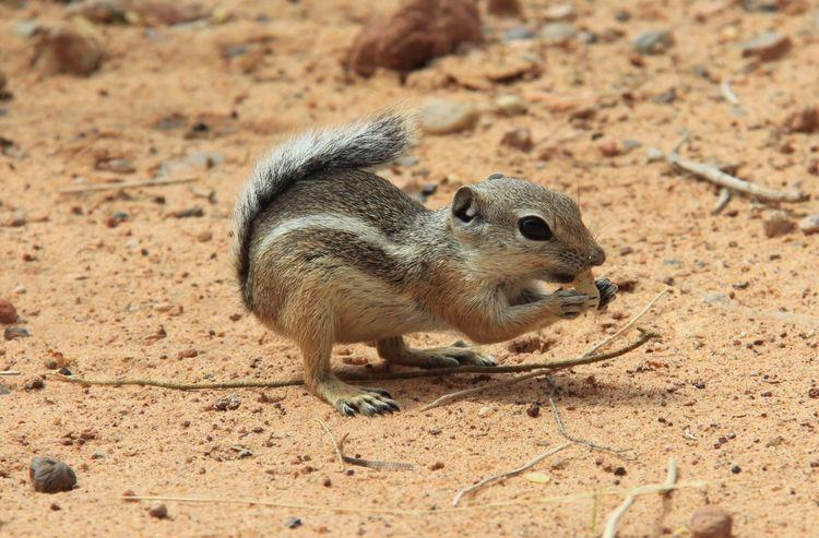Chipmunk having a snack Animal Wildlife Animal Themes Sand Day