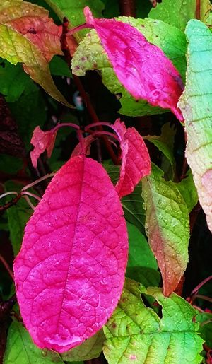 Sheets🍃 Leaf