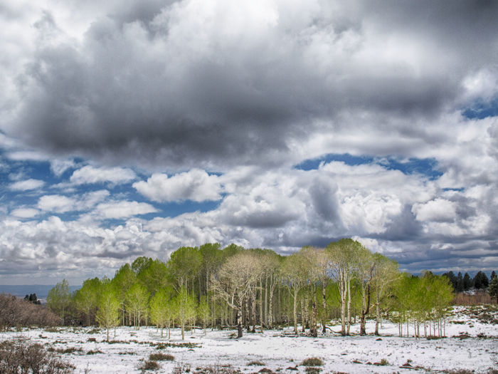 Beauty In Nature Cloud - Sky Day Landscape Nature No People Outdoors Outside Ont The Top With Snow In May Scenics Sky Storm Cloud Tree Weather