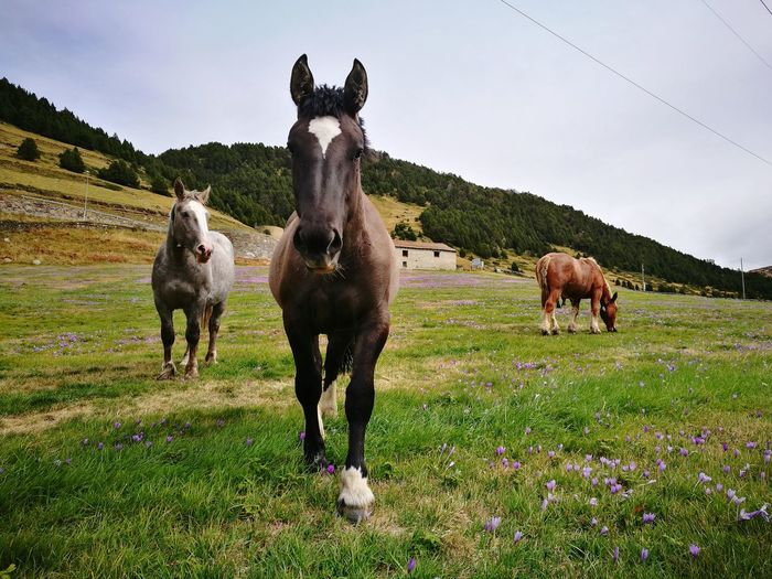 Agriculture Domestic Animals Animal Themes Beauty In Nature Nature Andorra🇦🇩 Horses