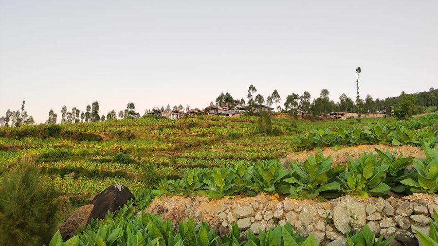 farmland Plant