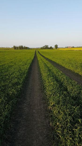 Landwirtschaft Sweden Schweden Agriculture Raps Reps Gärsnäs Skåne