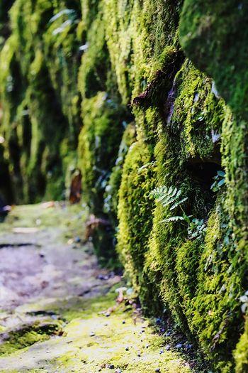 Green Green Green!  Beautiful Nature Moss-covered Moss & Lichen Beautiful Moss Moss Art EyeEm Best Edits Mossporn Mountain Load Moss