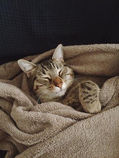 Sleeping Sleep Sleeping Cat Domestic Cat Sleeping Relaxation Feline Animal Themes Eyes Closed  Pets Domestic Animals Mammal Indoors  Comfortable No People Lying Down One Animal Day