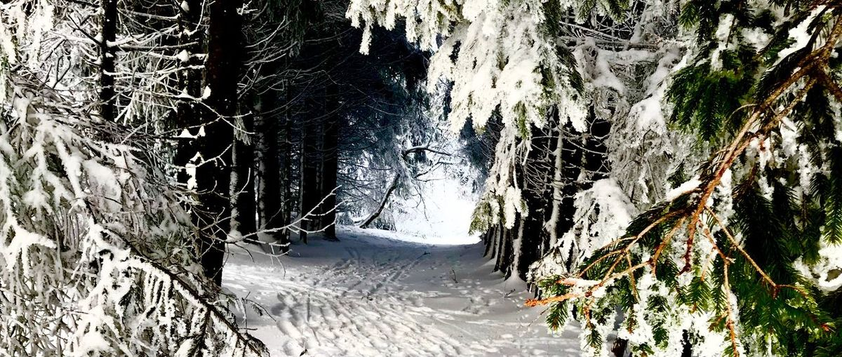 Wasserkuppe.exe 1 Germany Ice Wasserkuppe Snow Nature Winter Cold Temperature No People Day Outdoors Tree Beauty In Nature Mountain Close-up Shades Of Winter