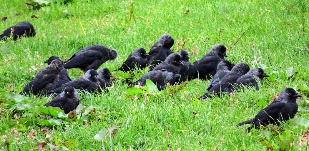 Flock of ducks on grass