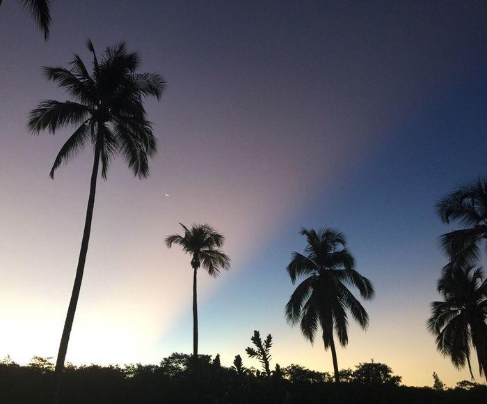 Aurora Borealis Coconut Trees Beautiful Nature Rota Dos Coqueiros Pernambuco Brazil Beautiful Palms Brazil Sunset Beach In Recife Northeast Of Brazil Nature Beautiful Colours.... Sunset Rota Dos Coqueiros