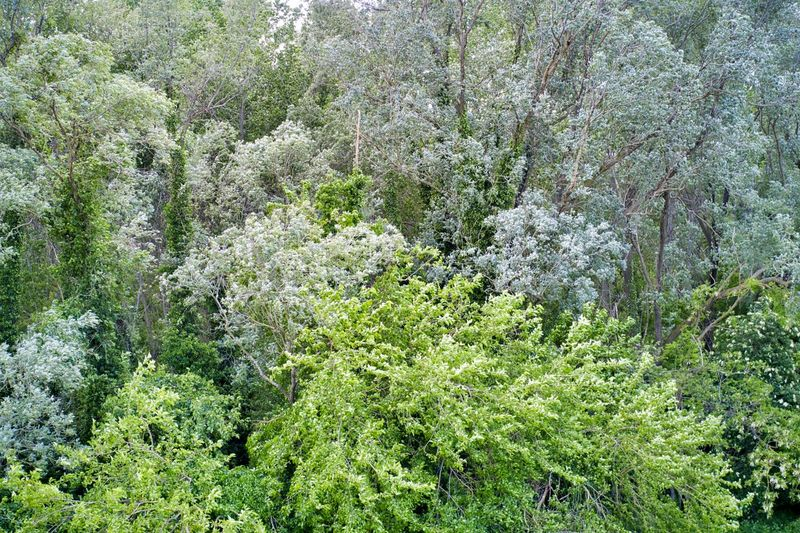 Willows and poplars and other trees in a forest; seen from above Drone  Drone Photography Mavic 2 Pro Mavic Canopy Willow Tree Willow Poplar Green Green Color Shades Of Green  Treetop Forest Woods Plant Growth Tree Beauty In Nature Land Tranquility Day Nature No People Lush Foliage Scenics - Nature Tranquil Scene Foliage Outdoors High Angle View Full Frame Backgrounds Non-urban Scene WoodLand Rainforest Nobody