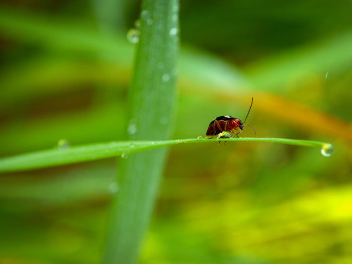 Animal Animal Body Part Animal Themes Animal Wildlife Animals In The Wild Beauty In Nature Blade Of Grass Close-up Day Focus On Foreground Green Color Growth Insect Invertebrate Leaf Nature No People One Animal Outdoors Plant Plant Part Selective Focus