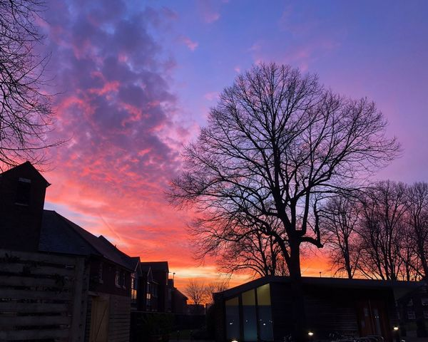 Red sky in the evening IPhoneography IPhone Day City Tree Low Angle View Outdoors Beauty In Nature Nature No People Silhouette Sky Built Structure Architecture Building Exterior Bare Tree Sunset