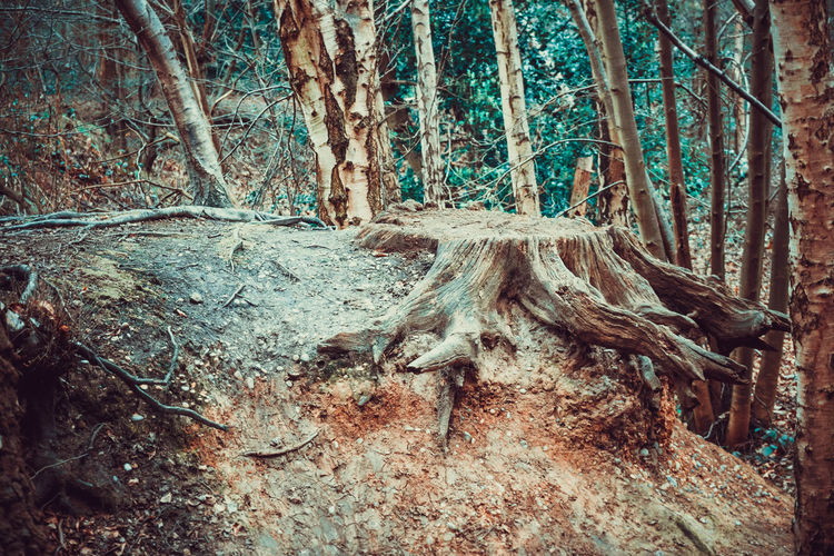 Beauty In Nature Branch Creepy Roots Day Dead Plant Dead Tree Felled Tree Forest Just Roots Landscape Nature No People Non-urban Scene Outdoors Scenics Spreading Tranquil Scene Tranquility Tree Tree Trunk WoodLand Woods