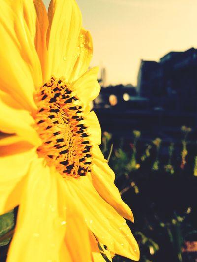 Sideout Flowers Summer Urban Lifestyle EyeEm Nature Lover Eye4photography