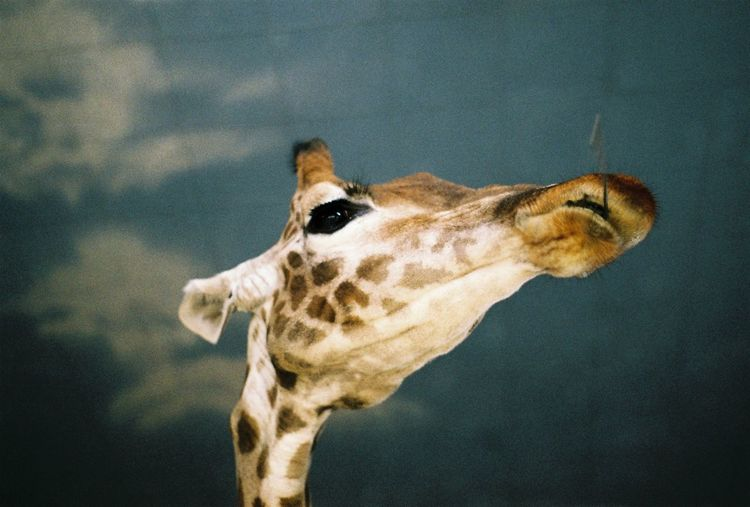 Low angle view of giraffe