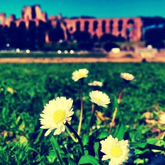 Rome Circomassimo Flowers Sunnyday Relax Peace