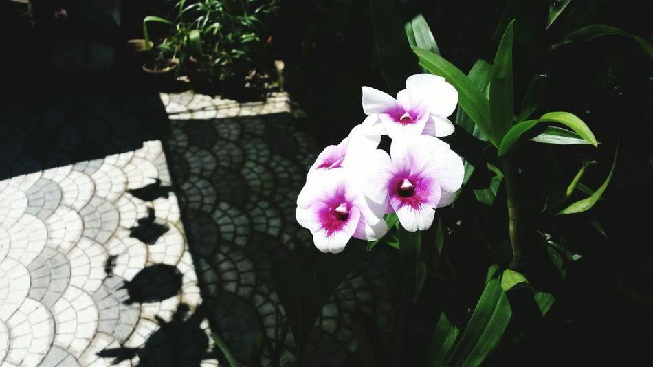 Photooftheday EyeEm Nature Lover Eyem Best Edits Beautiful Flower Eyemphotography Orchids Grandmas Garden
