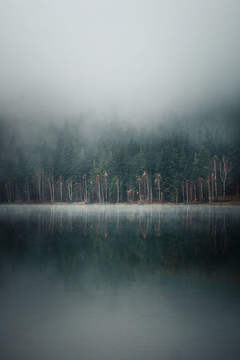 Water Fog Tree Lake Tranquility Beauty In Nature Tranquil Scene Plant Reflection Scenics - Nature No People Nature Non-urban Scene Day Waterfront Forest Sky Land Outdoors Hazy  Reflection Lake Natuare Trees Reflection Fall Beauty