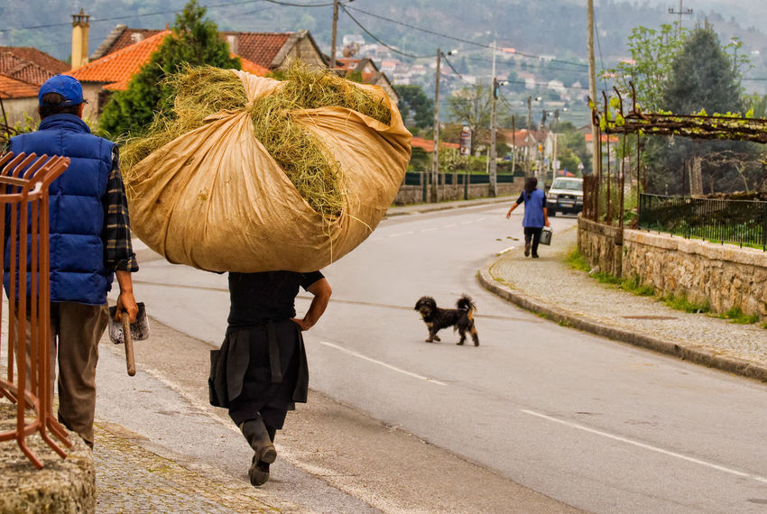 The division of labour, man carries shovel, woman carries haystack on her head, Soajo, Parque Nacional da Peneda-Geres, Portugal Hay Bale Haystack Parque Nacional Da Peneda-Geres Peneda-Gerês National Park Portugal Soajo Working Woman Working Man Carrying An Item On Her Head Carrying Hay Farm Labour Farm Workers Farm Workers Walking Home Farming People Incidental People Occupation Outdoors Real People Rear View Walking