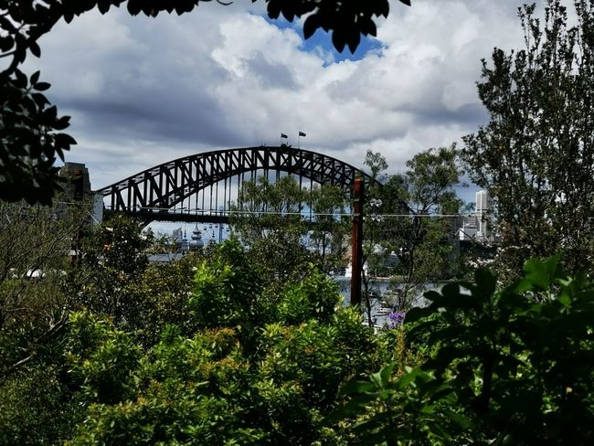 Sydney harbour bridge Sydney Australia Tree Sport Amusement Park Park - Man Made Space Sky Cloud - Sky