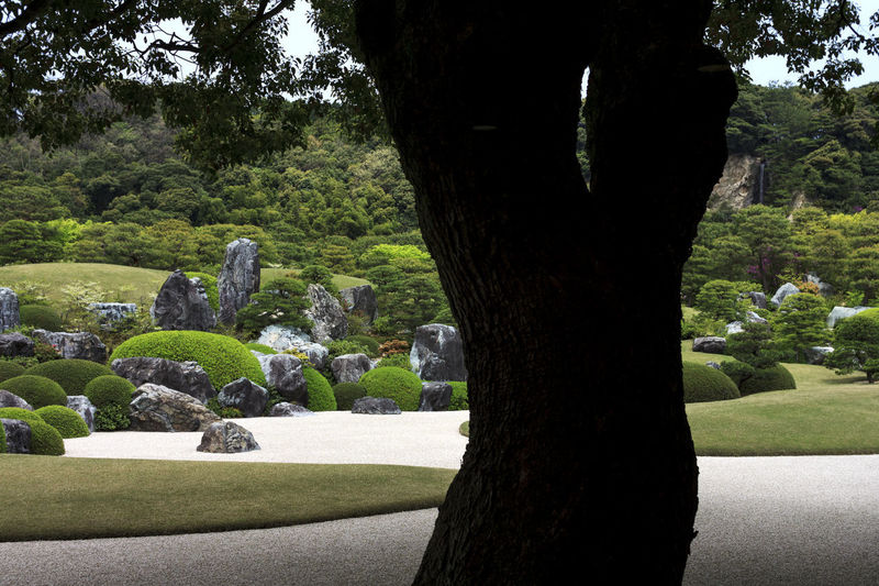 ADACHI MUSEUM OF ART Blanched Water Japanese Culture Japanese Garden Japanese Style Art And Craft Beauty In Nature Formal Garden Garden Grass Green Color Growth Nature No People Park Park - Man Made Space Plant Rock Tranquility Tree Tree Trunk Trunk