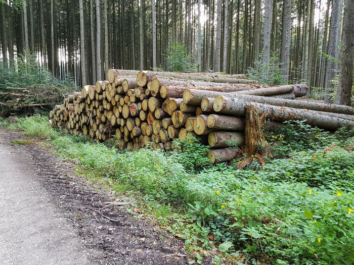 Baumstämme Wald Waldspaziergang Nature Baumstamm Baumstämme Baumstamm Liegend Brennholz Brennholz Stapel Tree Stack Forest Forestry Industry Log Timber Deforestation Green Color Firewood Tree Ring Tree Stump